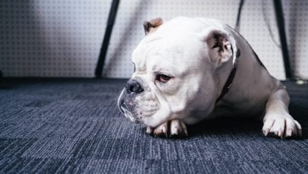 How Are Toenail Injuries Prevented and Treated in Dogs?