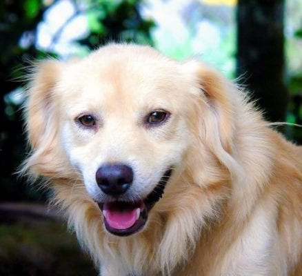 5 Interesting Facts About Dogs